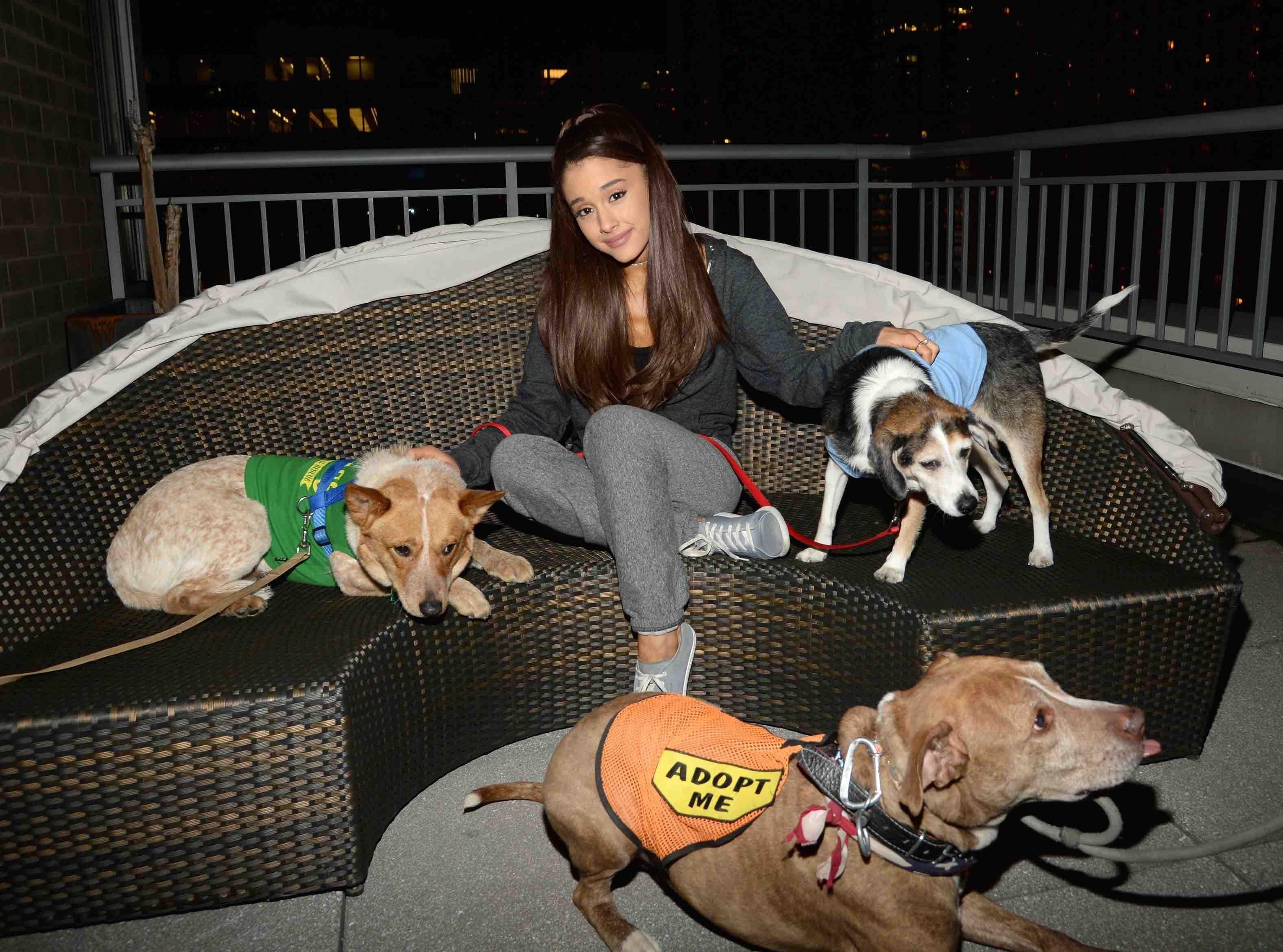 Photos Ariana Grande Les Chiens Et Elle C Est Une Grande Histoire D Amour