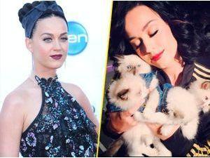 """Katy Perry : elle passe au """"purple""""... Vous la préfériez brune ?"""